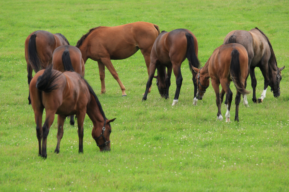 Do you know what is missing from your pasture?
