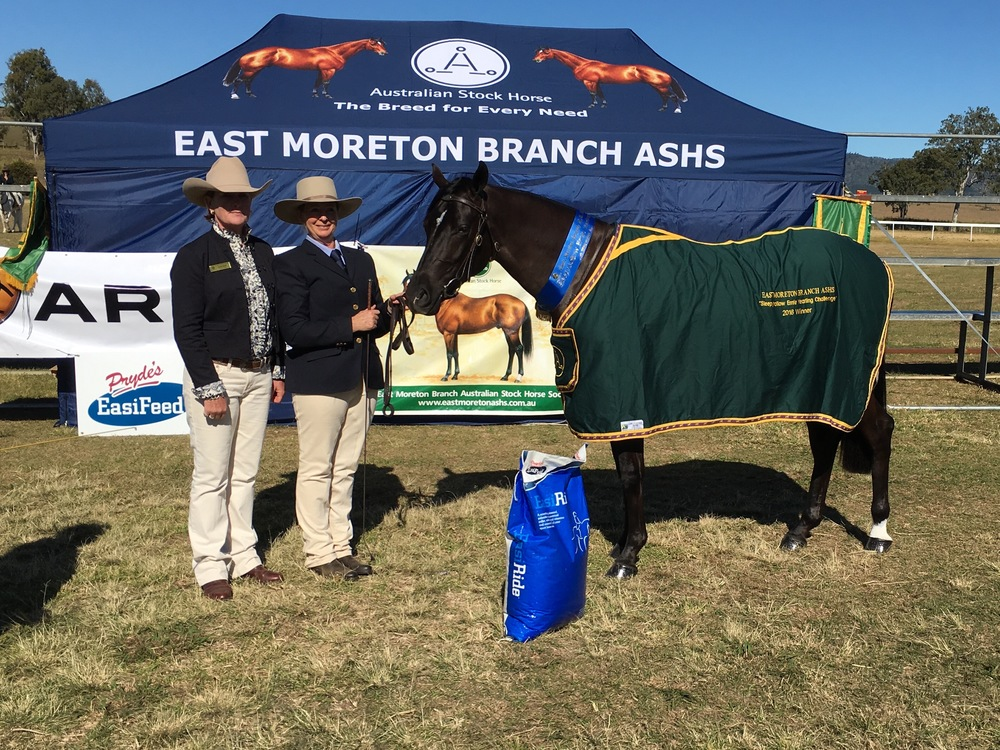 Stock Horse - East Moreton Branch ASHS