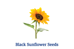 Black-Sunflower-Seeds.png