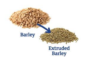 Barley-to-Extruded-Barley.png