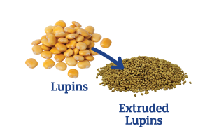 Lupins-to-Extruded-Lupins.png