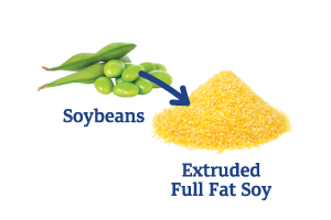 Soybeans-to-Extruded-Full-Fat-Sory.png