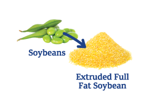 Soybean-to-Extruded-Full-Fat-Soy_Ingredient-pics-for-web.png