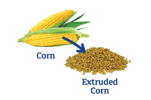 Corn-to-Extruded-Corn_Ingredient-pics-for-web.png