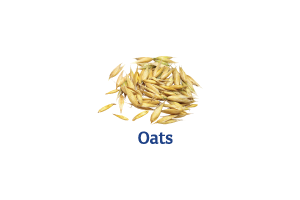 Oats_Ingredient-pics-for-web.png