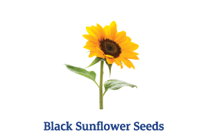 Black-Sunflower-Seeds_Ingredient-pics-for-web.png