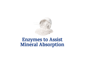 Enzymes-to-Assist-Mineral-Absorption_Ingredient-pics-for-web.png