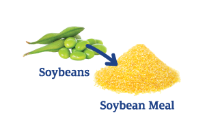 Soybeans-to-Soybean-Meal_Ingredient-pics-for-web.png
