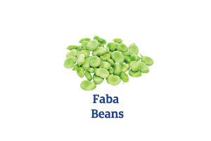 Faba-Beans_Ingredient-pics-for-web.png