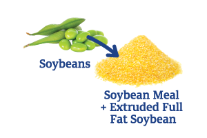 Soybean-to-Soybean-Meal-+-Extruded-Full-Fat-Soy_Ingredient-pics-for-web.png