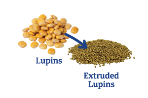Lupins-to-Extruded-Lupins_Ingredient-pics-for-web.png