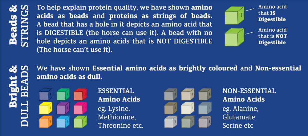 Protein Quality Pages_pic from Promo book_Sept18-02.png