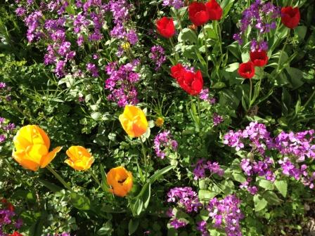 blomster i trädgården