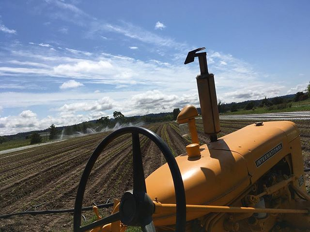 Cultivating the peppers, watering in tomatoes in the back, planting summer squash, refreshing beds in a tunnel... yeah it's farming season alright!  #springtime #organicfarming #farmall140 #superawesomemegasweetfarm #sonomacounty