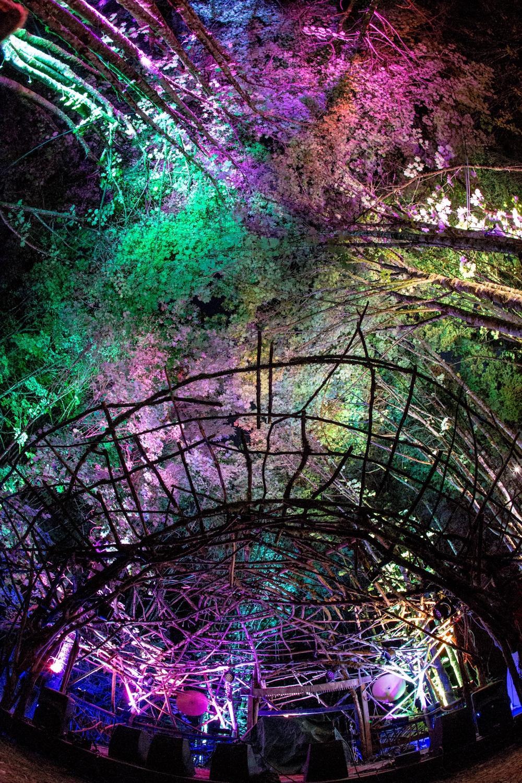 Woods Stage Aura by Erik Davis.jpg