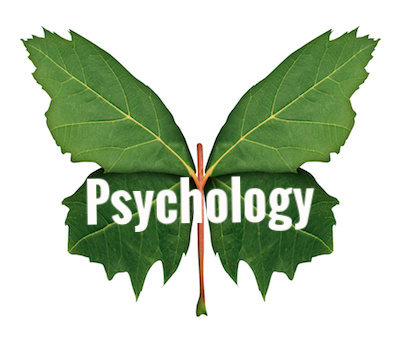 carol-moog-psychology-autism-psychologist.jpeg