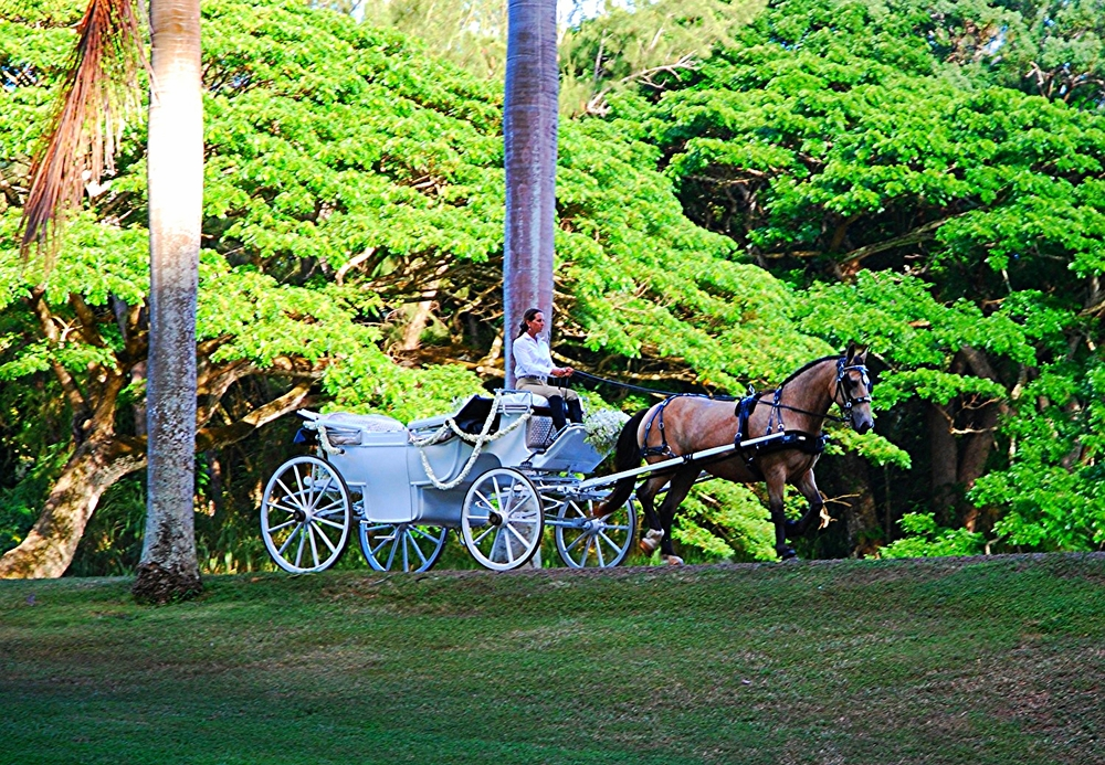 A horse and carriage is a Royal Hawaiian Tradition that can bring nobility and splendor like no other....                    Enjoy your day in a manner befitting royalty.