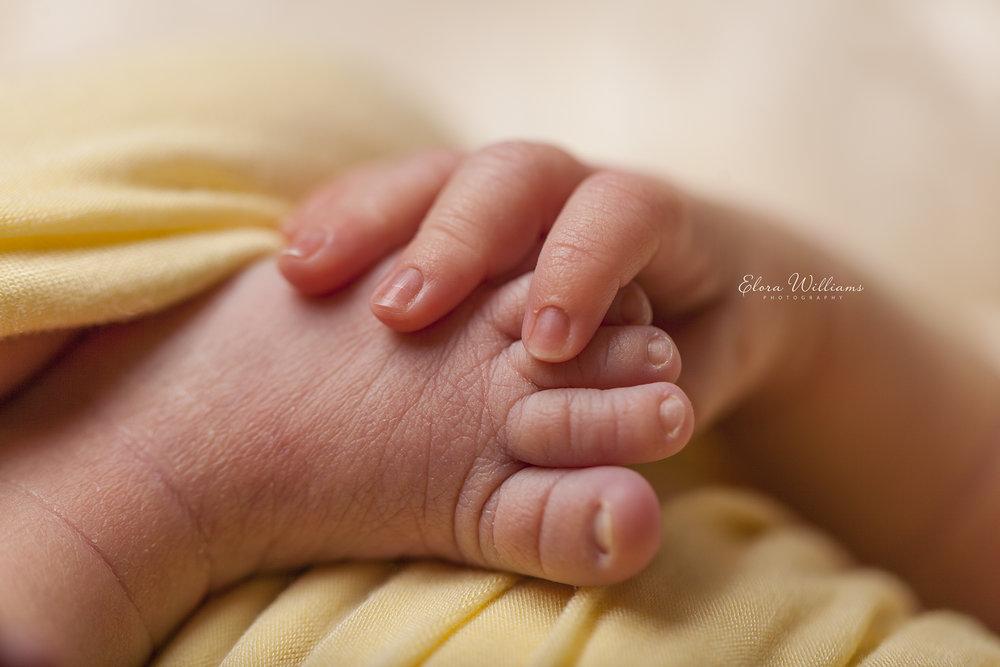 Elora Williams Photography Newborn Session