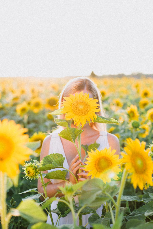 My_Sunflowers_web_color-1020.jpg