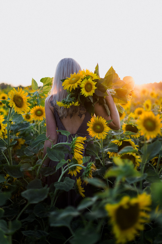My_Sunflowers_web_color-1080.jpg