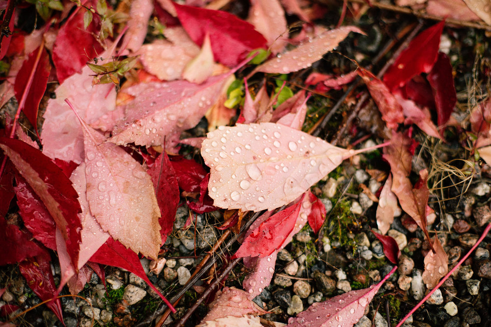 autumn_leaves-1003.jpg