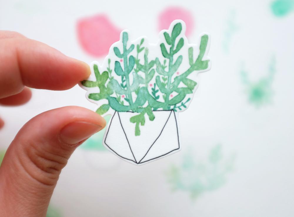 succulentinhand.jpg