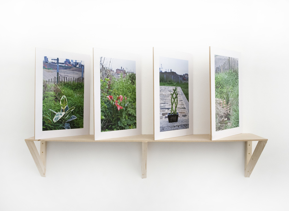 A re-appropriation of exotic house plants into the Stratford  landscape / C-type prints, mdf, and accompanying text