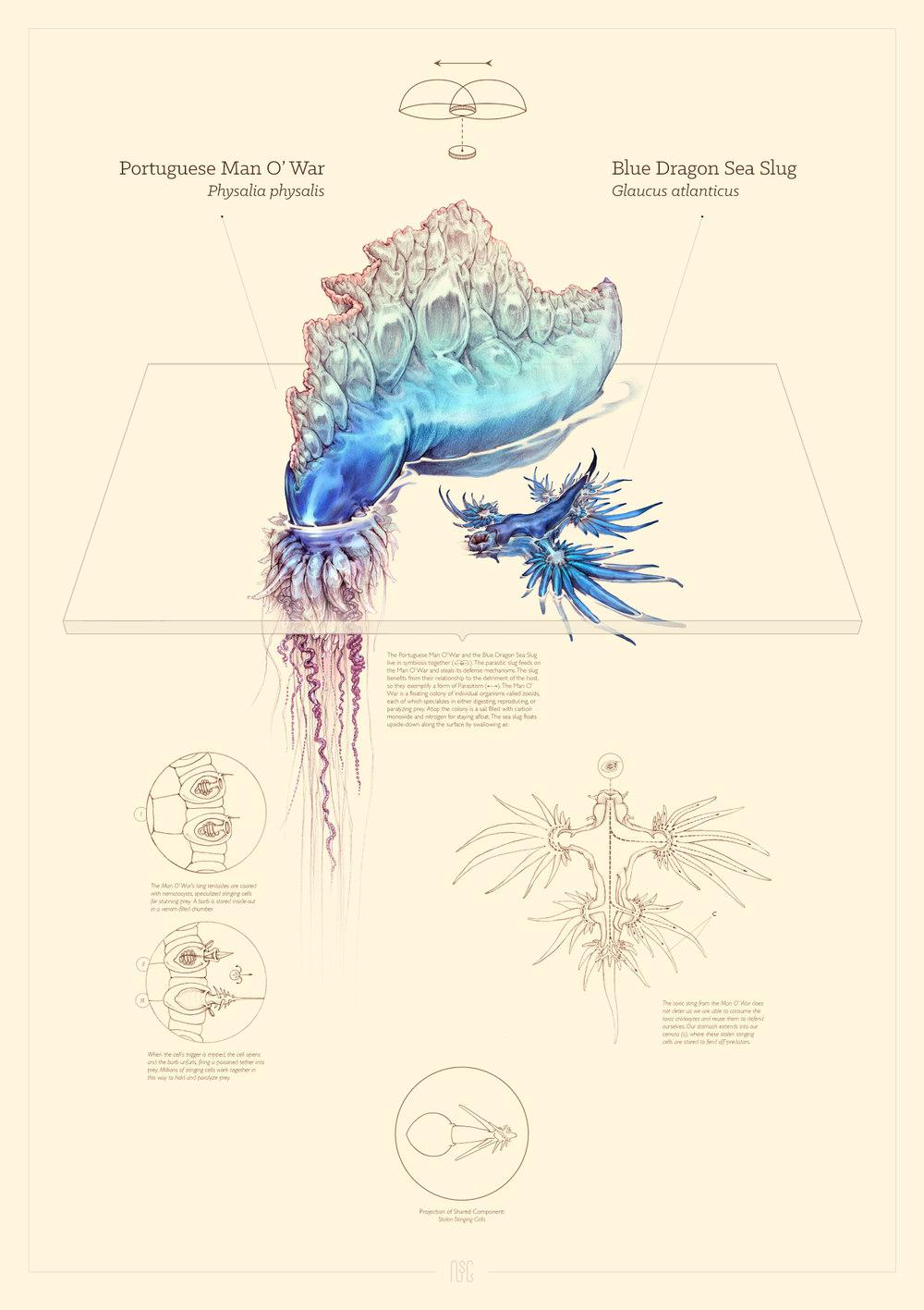 Copy of SYMBIONCE IV