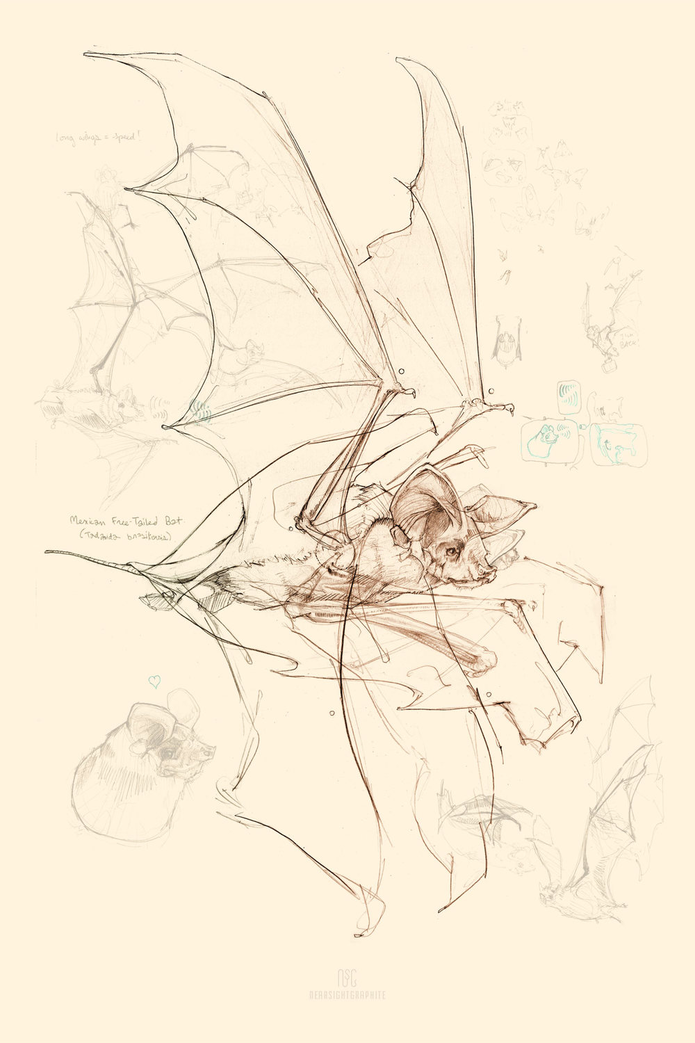 Copy of FREE-TAILED BAT