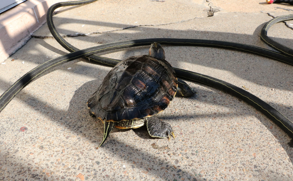 New turtlerope.jpg