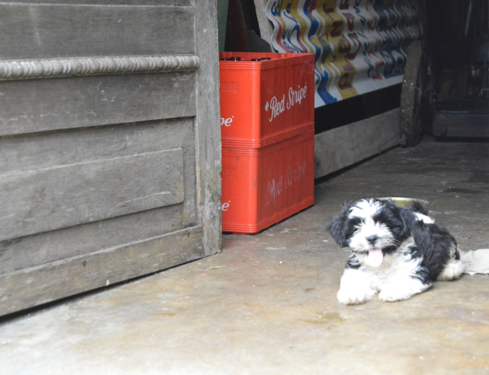 Jordan's puppy. Photo by Jesse Toth.