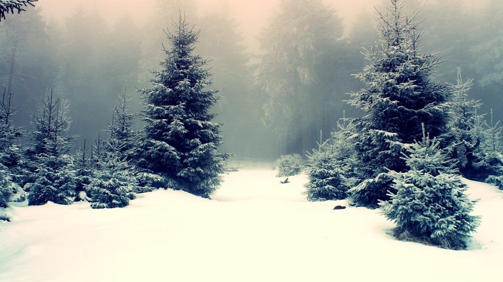 Snowy-forest.jpg