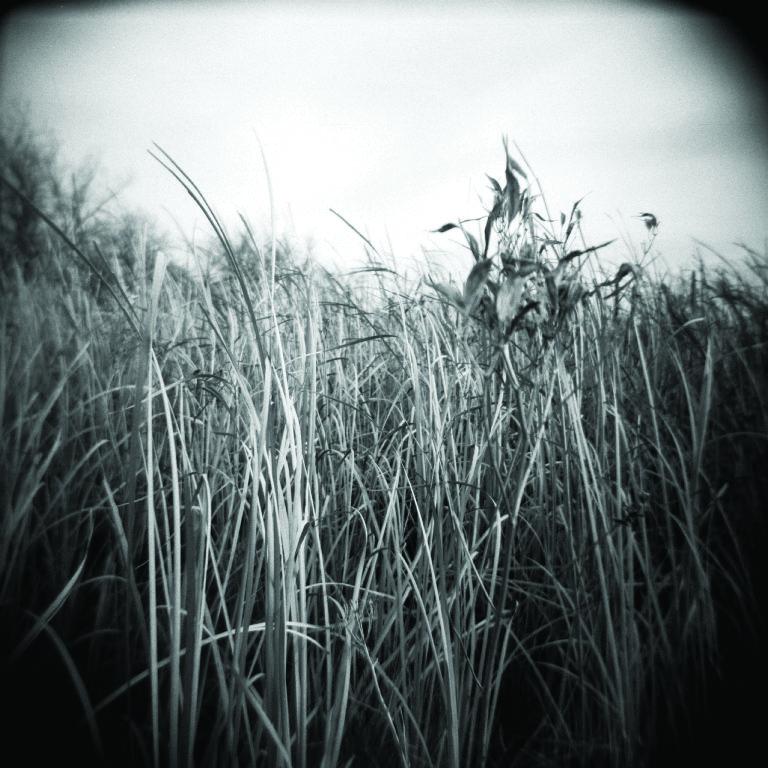 grass 1.jpg