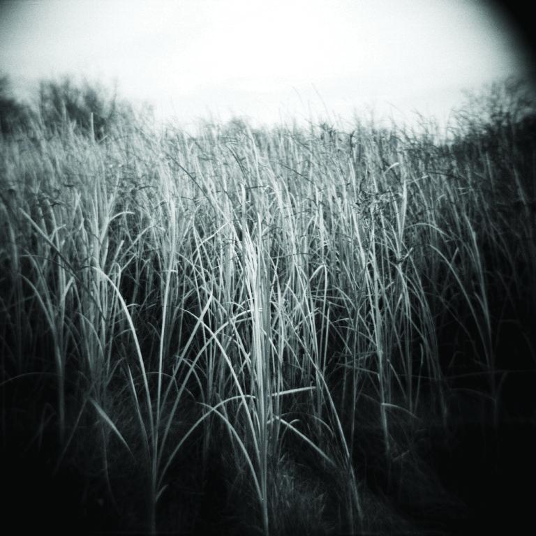 grass 3.jpg