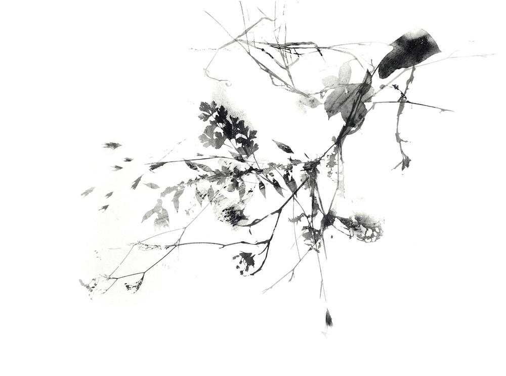 Branching _1_web.jpg