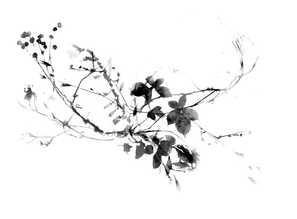 Branching_3_web.jpg