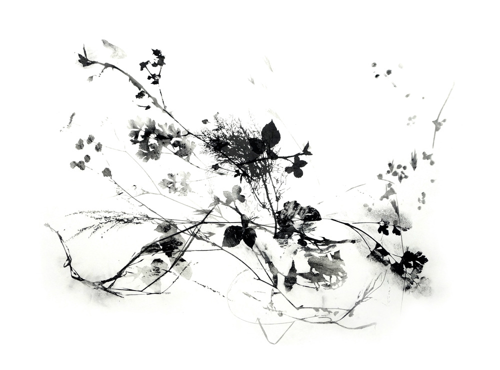 Branching_4_web.jpg