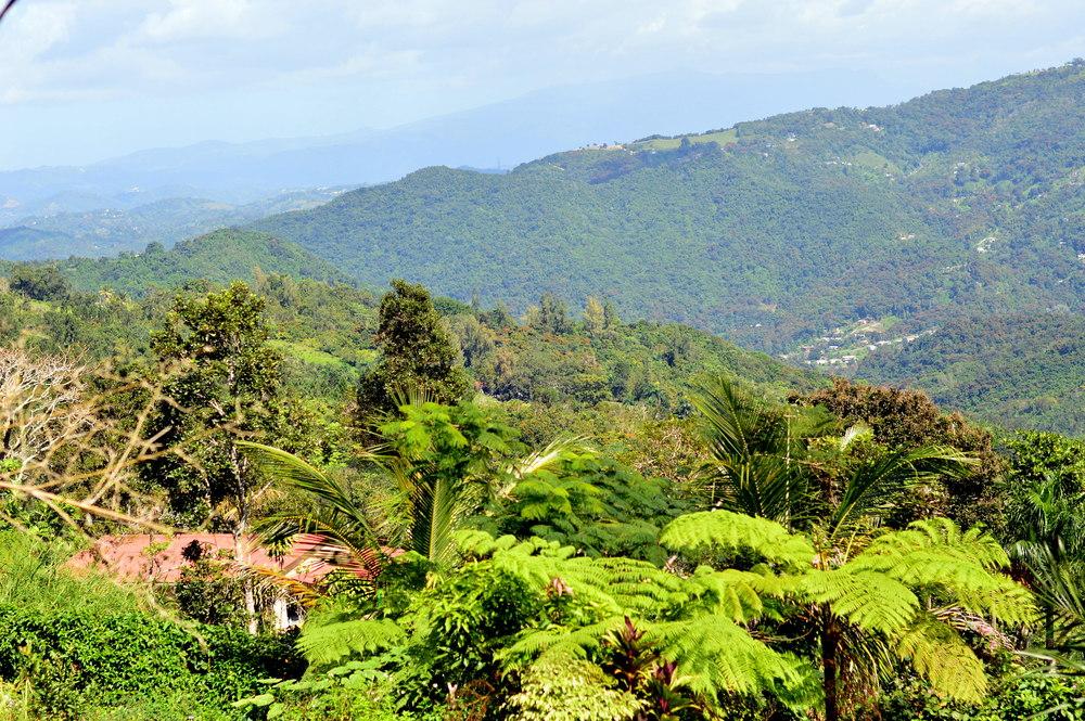 guavate-puerto-rico