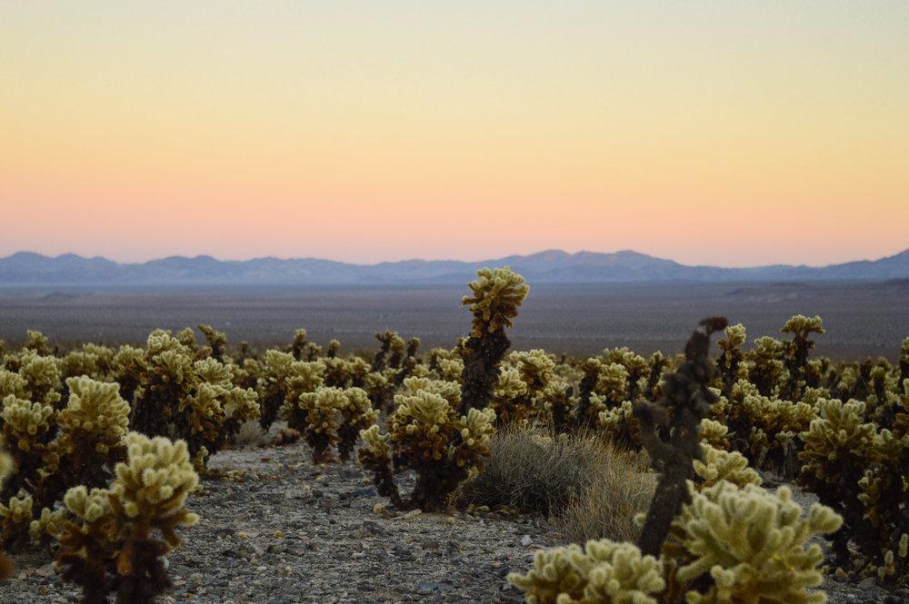 cholla-cactus-garden-joshua-tree-travel-itinerary-fashion-blogger-boho-style-sunset 10