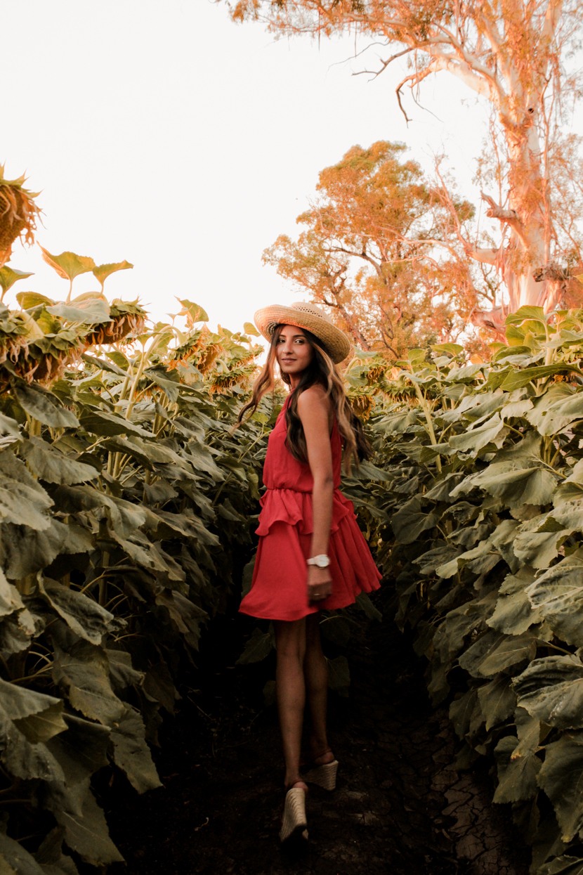 sunflower-fields-dixon-california-blogger 4