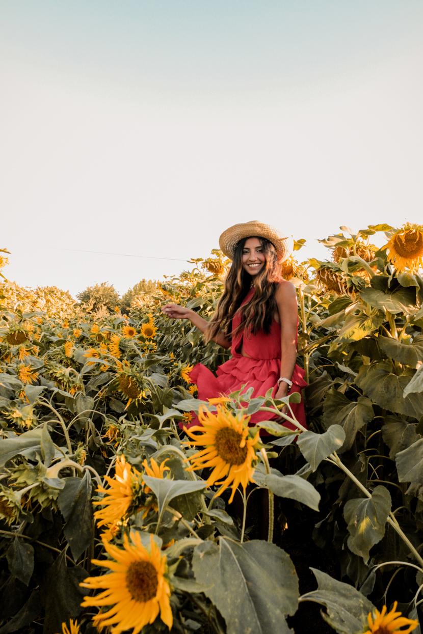 sunflower-fields-dixon-california-blogger-style 5