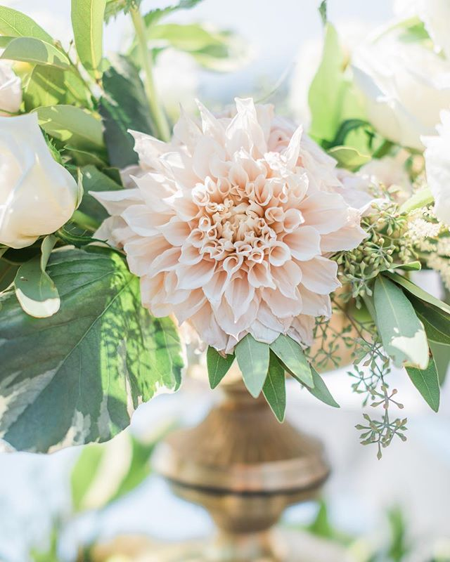 a big beautiful bloom curtesy of @twfloraltruck to brighten up this smoky bay area day from d+d's wedding @kundewinery design + planning @linenandlilac venue @kundewinery florals @twfloraltruck  rentals @encoreeventsrentals  photography @katewebber  videography @krisroller hair @allienicole_mua  make up @hairby_priscillagadow  catering @elainebellcatering  pie @chile.pies  band @luckydevilsband . . . . . . . . . . . . . . . . .  #flashesofdelight #kunde #kundefamilywinery #kundewedding #winecountrywedding #ohwowyes #liveauthentic #livethelittlethings #communityovercompetition #lessworkmorelife #thatsdarling  #thehappynow