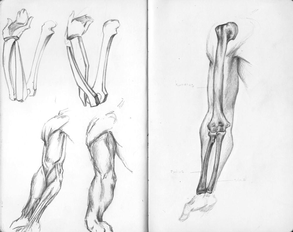 The Arm.jpg
