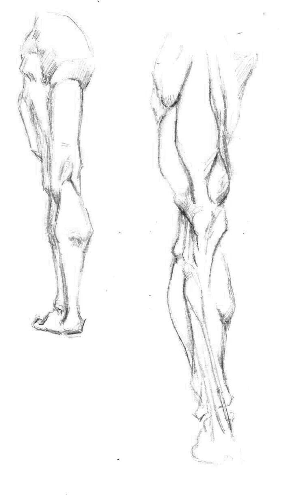leg again.jpg