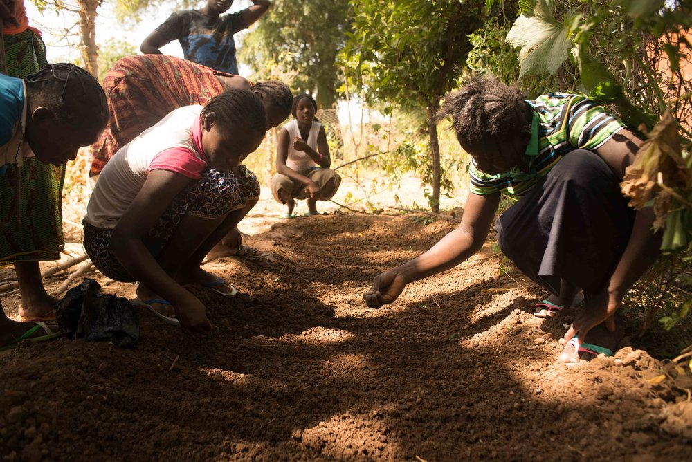 The girls plant cabbage seeds in the nursery after creating several large nursery beds.