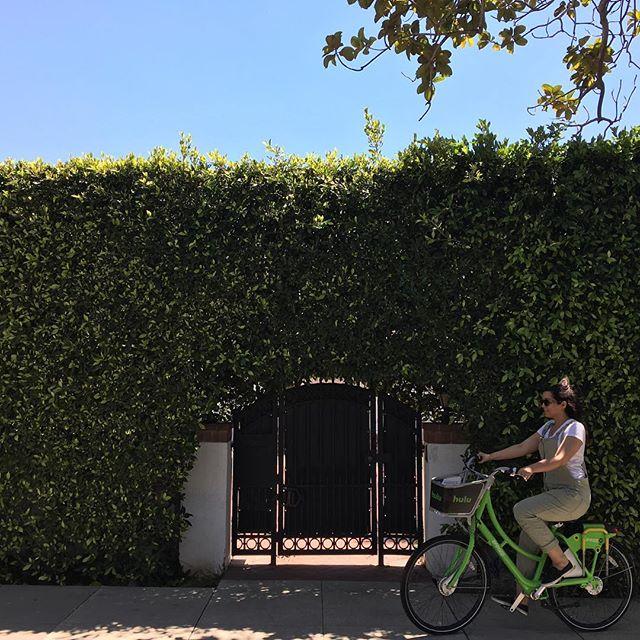Gorgeous day for biking.  Thanks to these #hulu bikes 🚴🏽