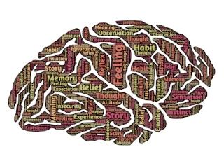 brain-544412_1920.jpg