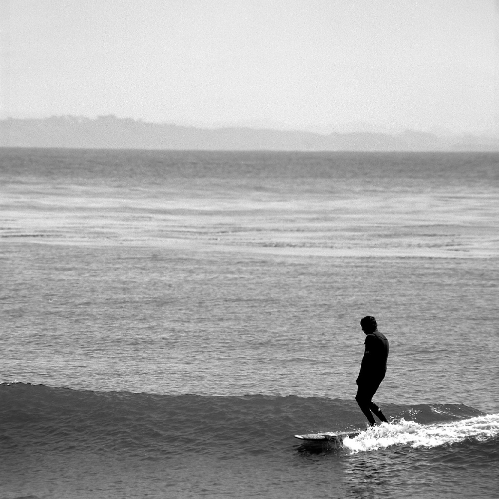 [#035208] Trimming in style, Study 1, Santa Cruz, USA, 2013