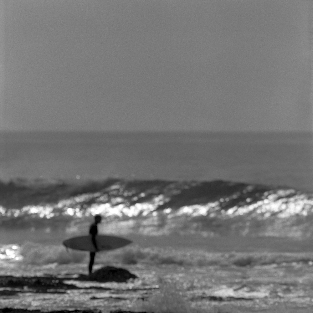 [#043107] Waiting for the right moment, Study 2, Santa Cruz, USA, 2013