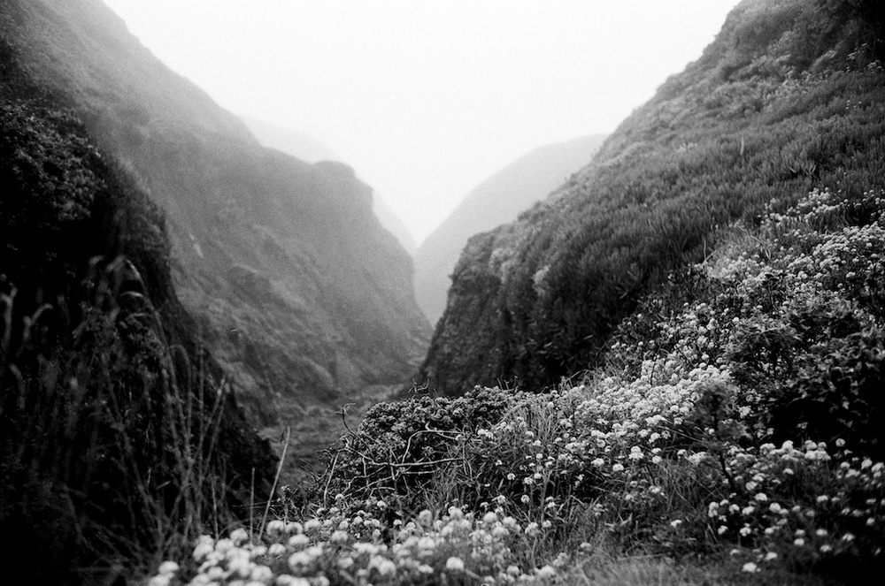 [#005612] Coastal Canyon, Santa Cruz, USA, 2010
